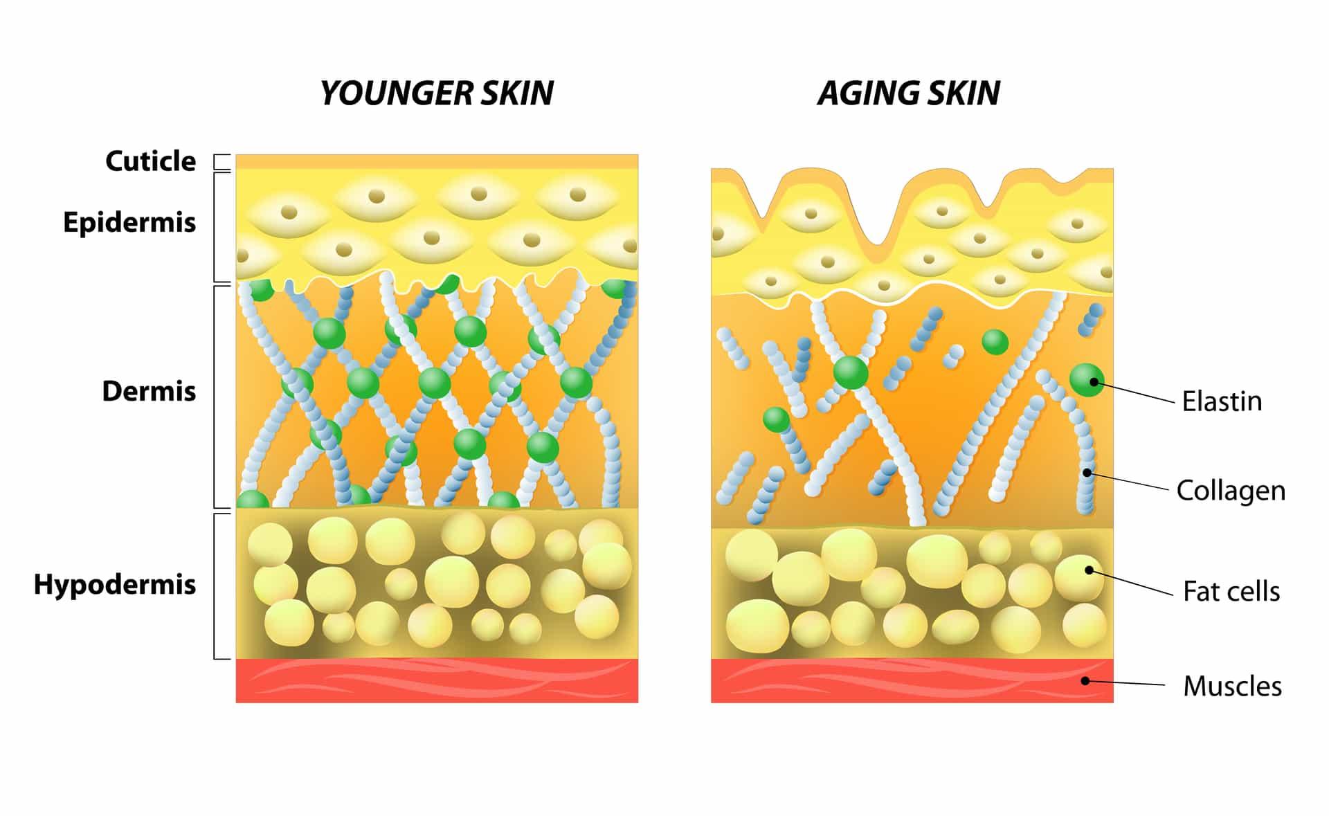 ویتامین سی برای پوست - تاثیر ویتامین C بر کلاژن سازی
